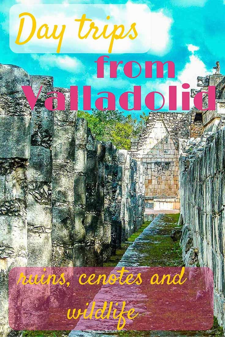 Day trips from Valladolid can take you to several Mayan ruins and cenotes (natural sinkholes), the Carribean beach town of Tulum, or Rio Lagartos on the Gulf of Mexico to see crocodiles and flamingos. Mexican Yucatan at its best!: