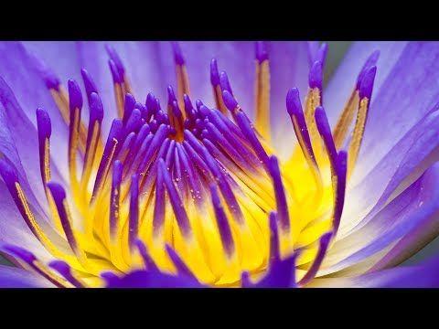 Entspannende Zen-Musik, Meditationsmusik, Positive Energie Musik, Entspannende Musik, ✿3133C - YouTube