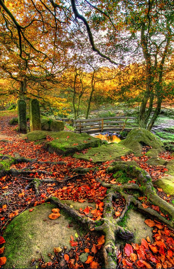 Autumn roots at the top of Padley Gorge near Grindleford in the Derbyshire Peak District of central England • photo: Simon Bull on Flickr