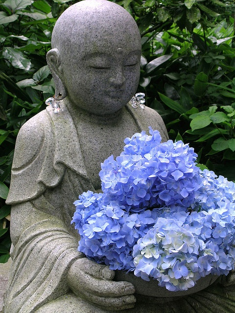 Buddha statue with blue hydrangeas. Amidaji Temple, Hakone, Japan. #buddha #blue #hydrangea