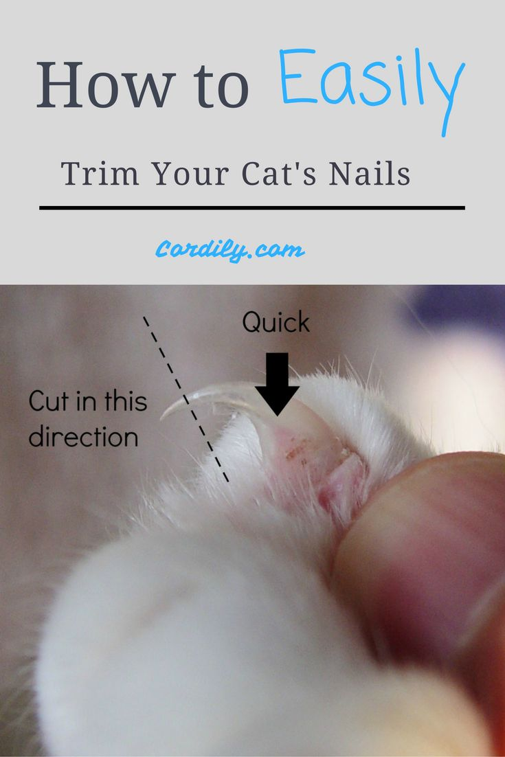 Easily trim your cat's nails.