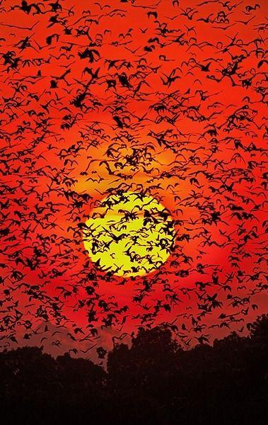 Funny Wildlife – v0lt0rb: Bat Blizzard ~ von Greg du Toit auf …
