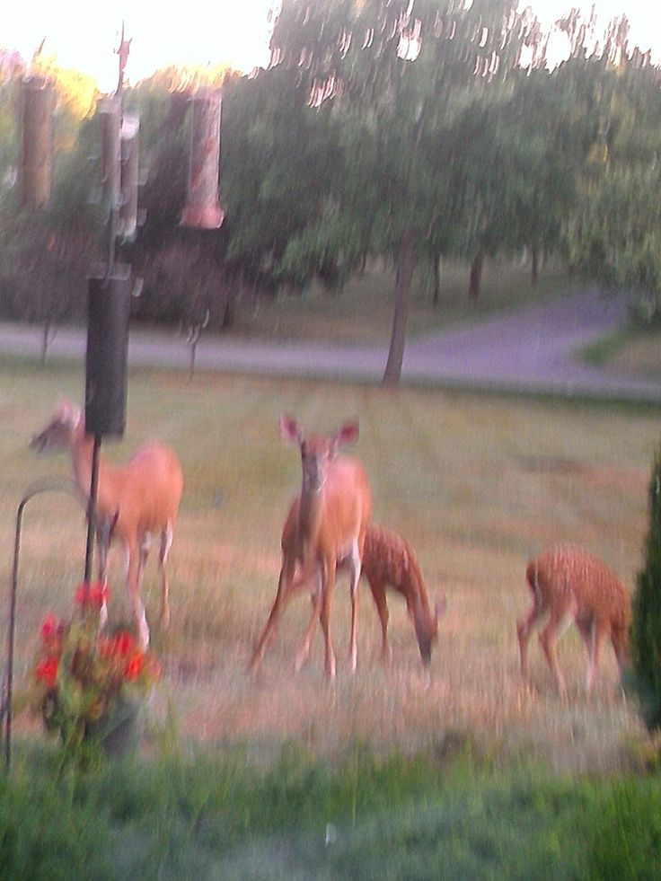 Front yard friends