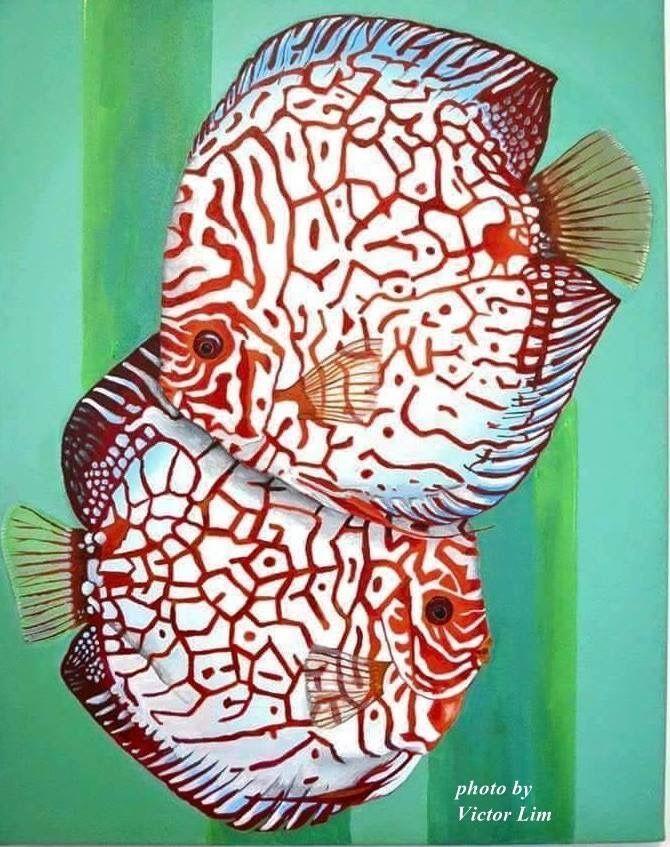 Oh My Gosh They Re Beautiful Tropicalfishsaltwater