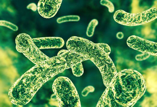 qualidade-natural-A População-de-Bactérias-Que-Habitam-Nosso-Intestino