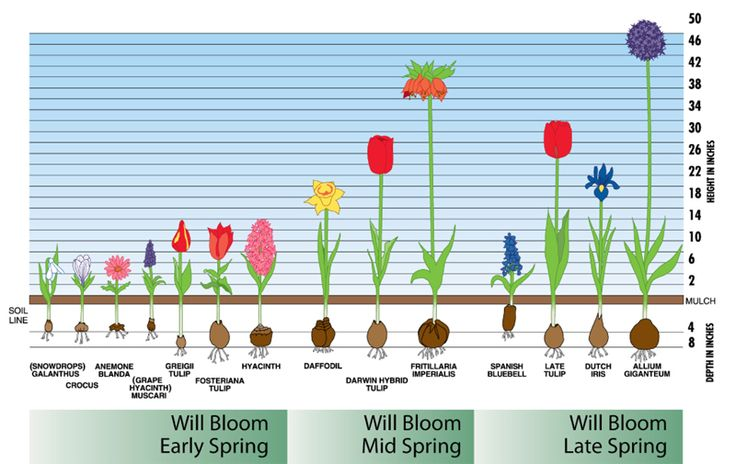 Bloom Time