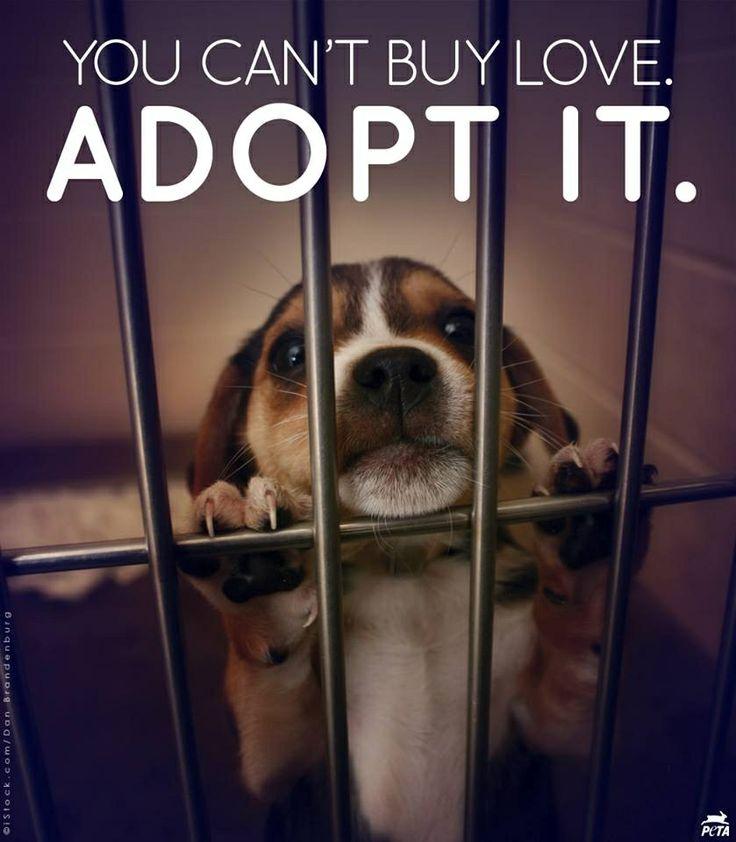 Adopt nobodys dog pinterest shops