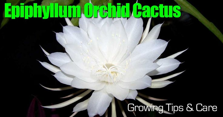 how to grow inside orchids