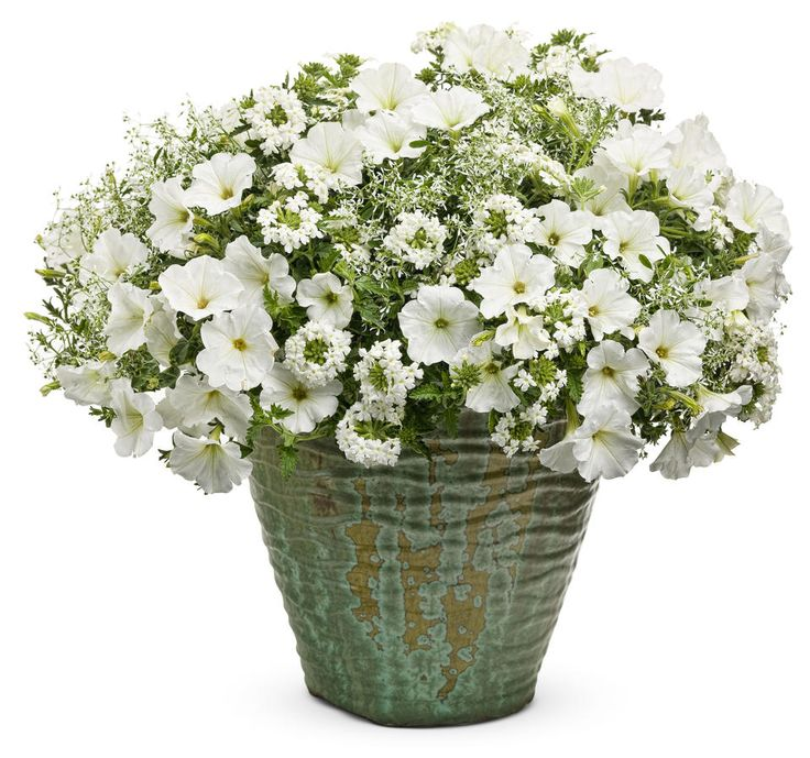 Garden Crossings Offers You Options For Your Combination Container Plantings Purchase Alpine Snow Combo Kit Our Preplanted 12 Inch Hanging Basket Or