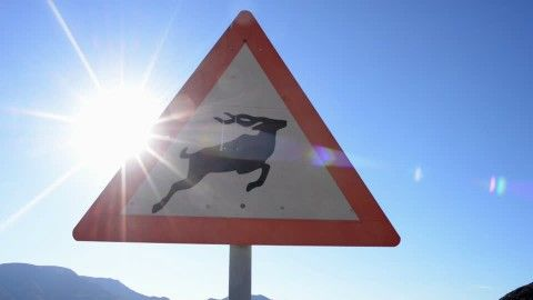 Warning (Tier), Warning Sign, Carefulness, Prevention of Cruelty to Animals, Signpost, Road Sign, Antelope, Sunray, Sign (Signboard), Namibia, Tourism, Desert, Street, Sights, Non Urban Scene, Mountain Region, Travel Destination, Wild Animal (Animals in the Wild), No People, Sunshine, Day,