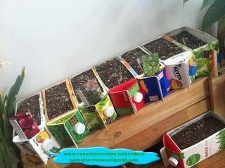 Proyecto de mini huertos ecológicos usando materiales reciclados