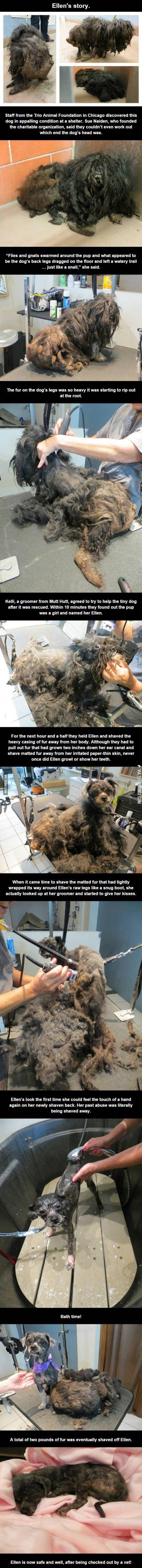Meet Ellen - What a sweetheart.