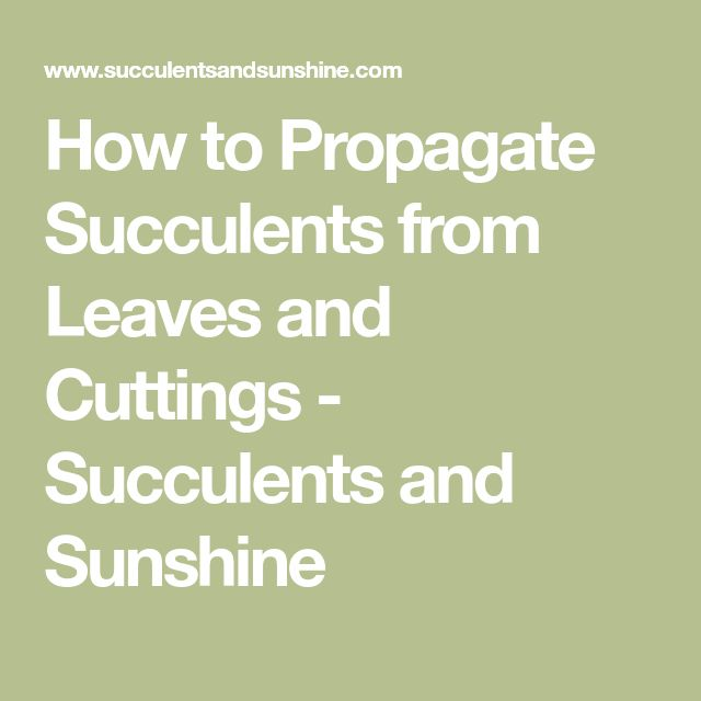How to Propagate Succulents from Leaves and Cuttings - Succulents and Sunshine