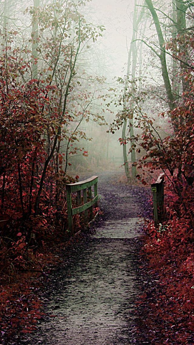 Autumn Mist Path.