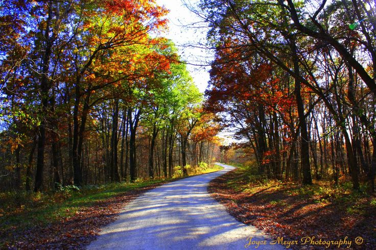 Yellow River State Forest by Joyce Meyer. #Fall in #Iowa