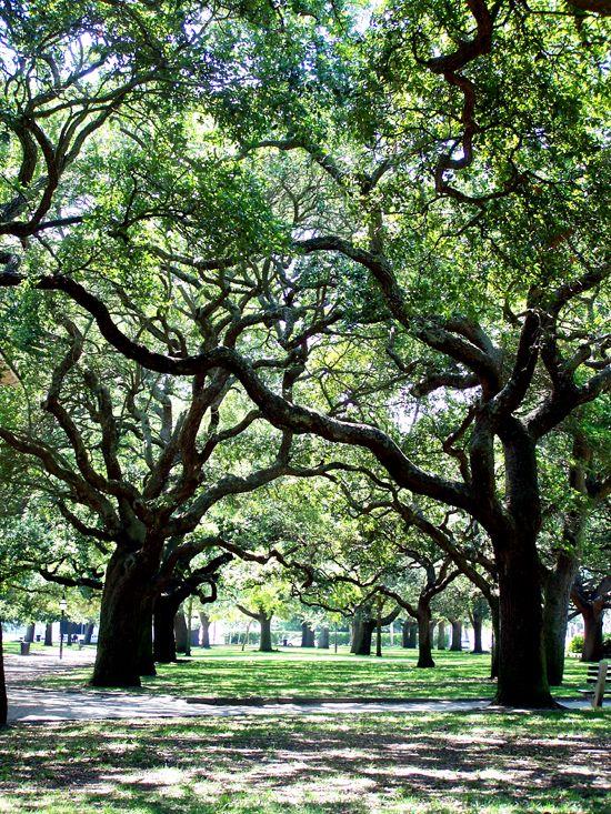 Best 25 Downtown Charleston Sc Ideas On Pinterest Charlestown South Carolina Charleston Sc
