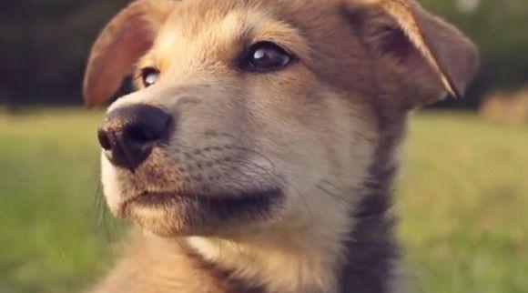 子犬が走るの速すぎて動画をうまく撮れないよぉ~!+スローモーションで撮影してみたらハッピーな動画が完成したでござる
