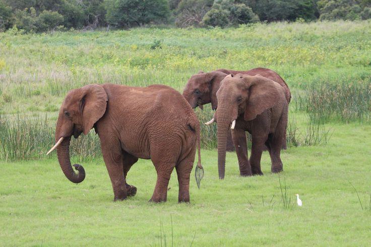 Elephants at Lake Jozini