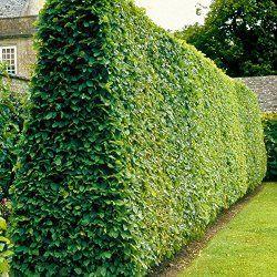 Grüner Sichtschutz - Moderner Sichtschutz im Garten