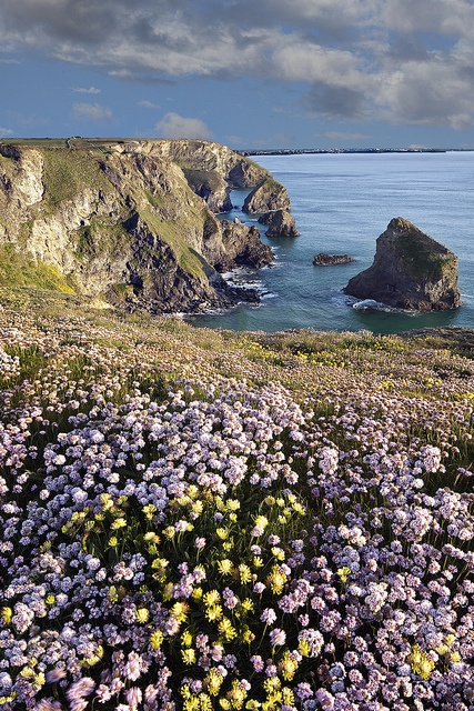 Early summer in Cornwall, England