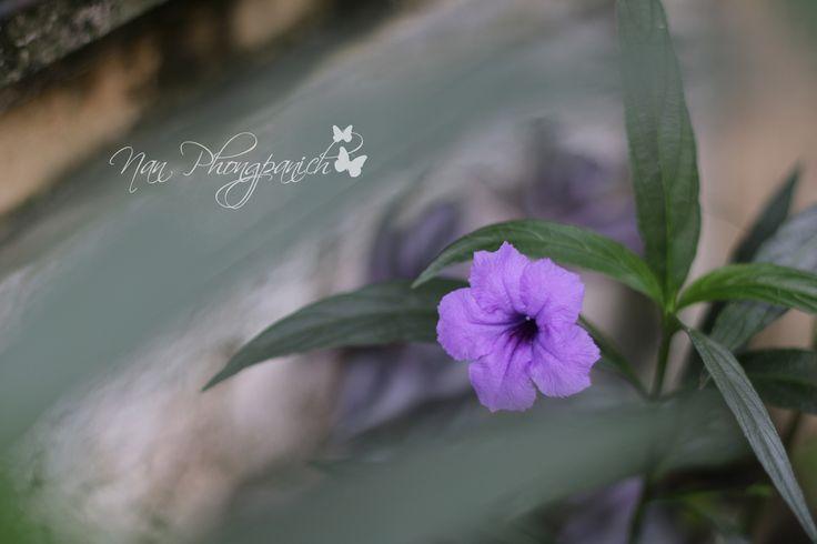 ต้อยติ่งฝรั่ง Canon EOS 70D : 50mm./f1.8