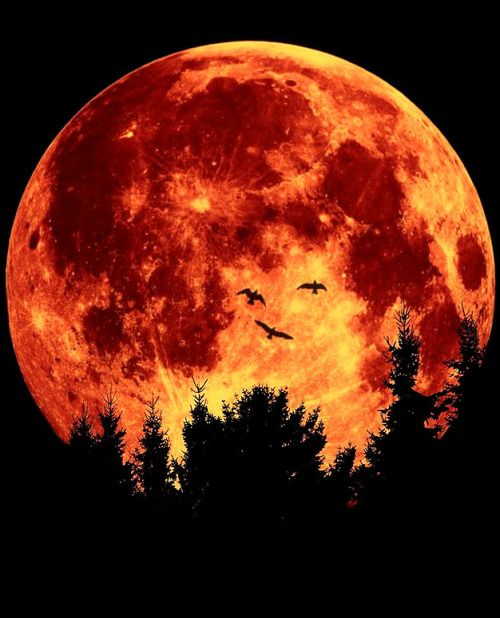 The Blood Moon..;. (by .Rob.)                                                                                                                                                                                 More