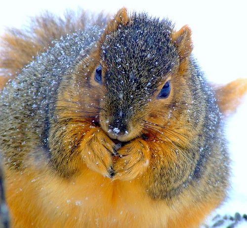 Eep! Another fat squirrel