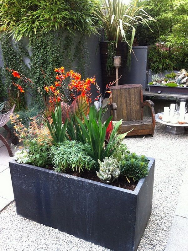 97 Best Images About Garden: Container Ideas On Pinterest