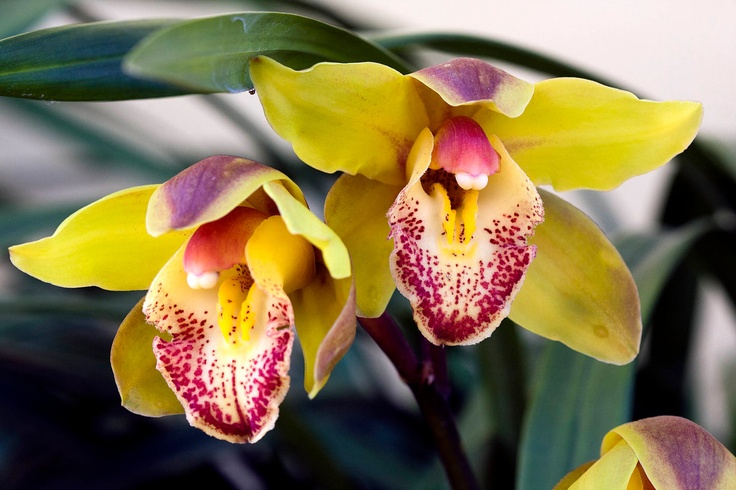 Orchidaceae on Fotopedia