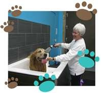 10 best dog wash images on pinterest dog wash animales and dog dog wash large format inexpensive tile with expoxy color on walls solutioingenieria Images
