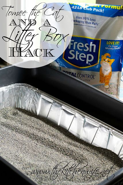 Tomee the Cat and a Litter Box Hack! #yougottabekittenme ad