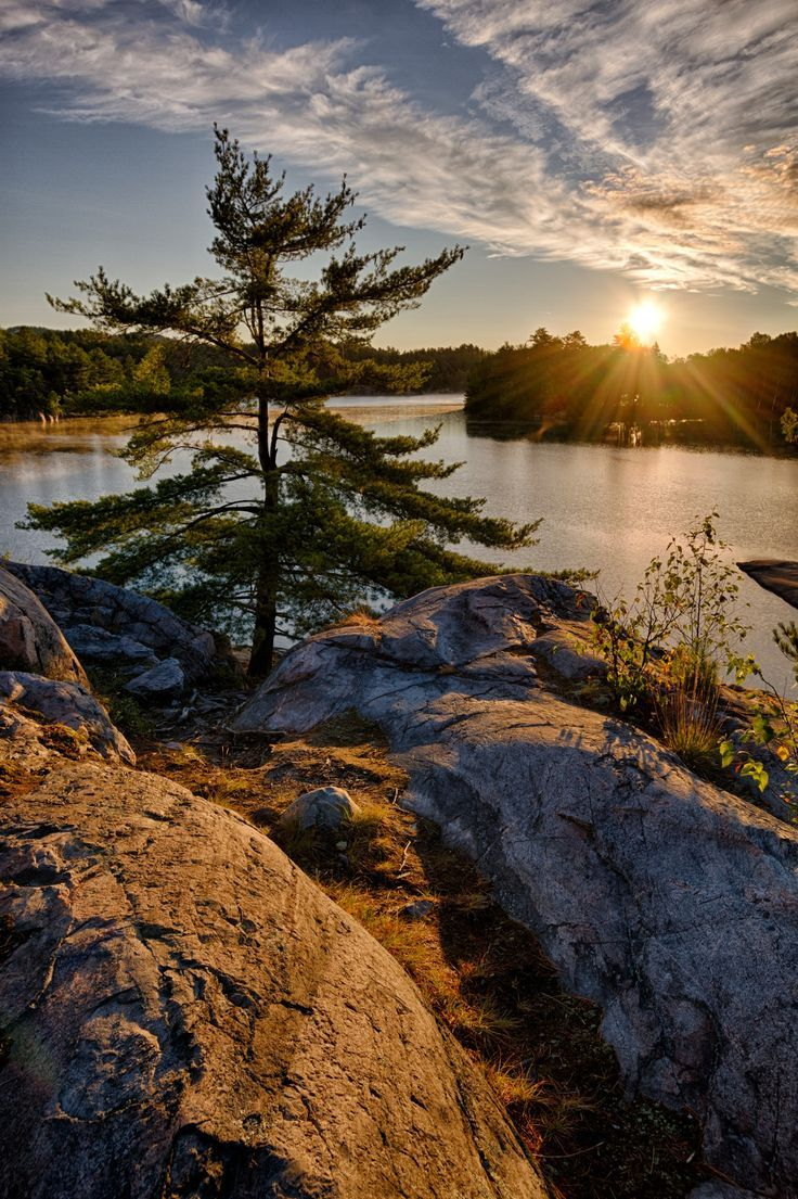 a lone tree on a rock cliff overlooking George Lake at Killarney Provincial Park, Ontario, Canada.