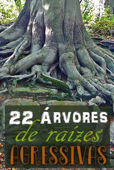 22 Árvores de raízes agressivas