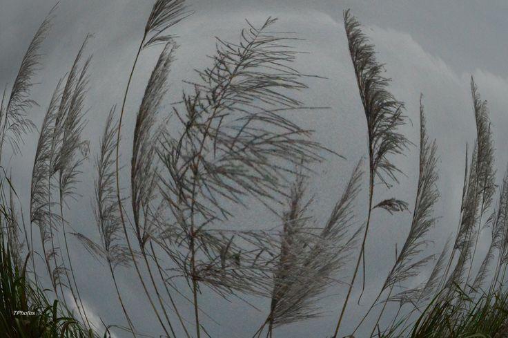 Camera effects wind blowin grass - InfoBarrel Images