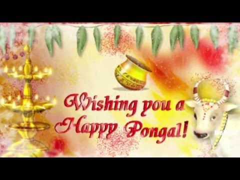 Happy pongal 2016 Images | Happy pongal 2016 Latest Wishes/SMS/Greetings...
