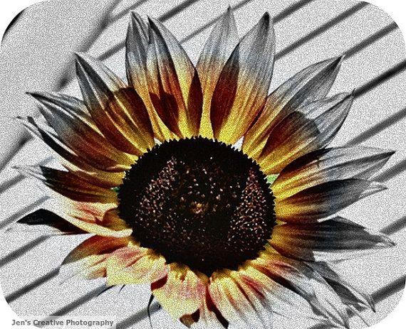 Color Me Sunny