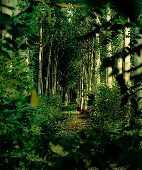 Enchanted Paths, Magick Places, Nature, Enchanted Green, Beautiful, Green Aisle, Roads, Photography, Magic Green