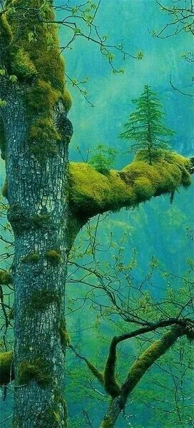 Tree in a tree.