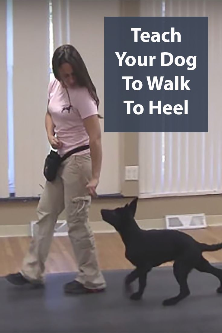 Teach Your Dog To Heel A Step By Step Guide Dog Training Dog