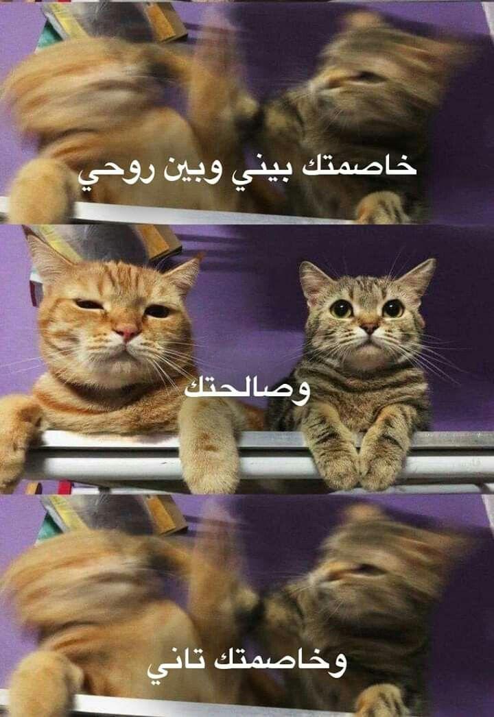 صور قطط مضحكة جدا 2015 مجلة مايا Funny Cute Cats Funny Animals Funny Animal Pictures