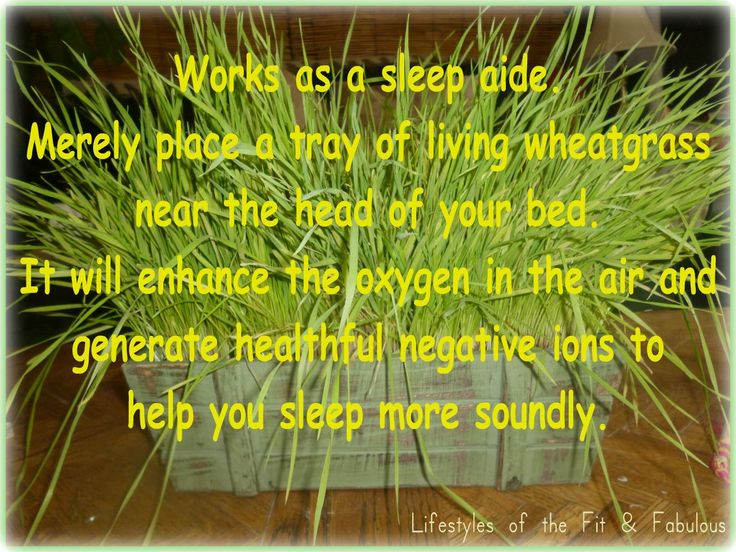 wheat grass -really is great to have in the house and next to bed
