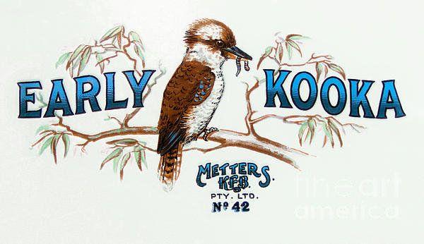 Early Kooka Print By Duncan Mcfarlane