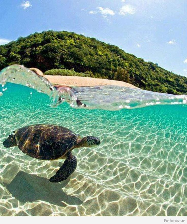 En la Costa Norte de Oahu.  Hawaii.. ¡Maravillas de la Creación!..