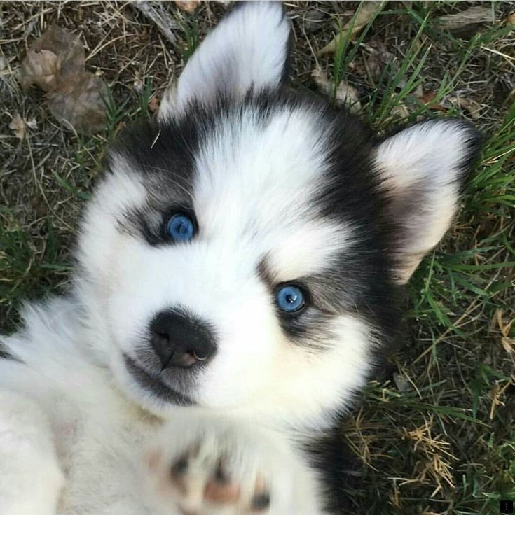Follow The Link To Get More Information Pictures Of Puppies