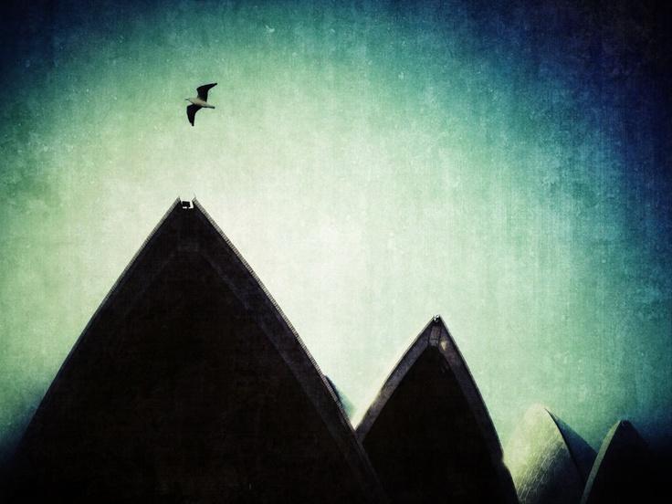 Soaring Above the Sails~    #sydney #australia #iphoneography #operahouse #bird