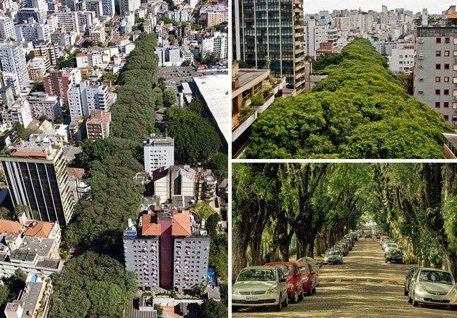"""Em meio a um grande túnel de árvores está a rua Gonçalo de Carvalho, em Porto Alegre, que ficou conhecida como """"a rua mais bonita do mundo"""". São quase 500 metros de calçadas onde mais de 100 árvores da espécie Tipuana estão enfileiradas. Algumas chegam a altura de um prédio de 7 andares fazendo com que a vista de cima seja ainda mais surpreendente. Os moradores mais antigos contam que as Tipuanas foram plantadas na década de 1930 pelos funcionários de origem alemã que trabalhavam em uma…"""