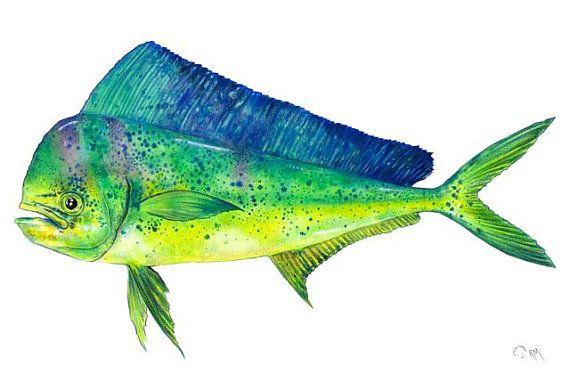 Dolphin fish mahi mahi watercolor and colored pencil on for Mahi mahi fish