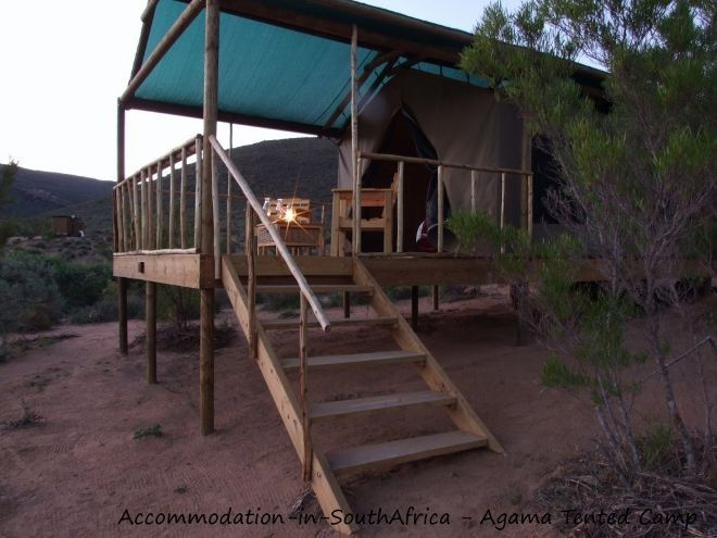 Agama Tented Camp accommodation. Namaqualand accommodation. Agama Tented Camp Namaqualand. Accommodation in Namaqualand.