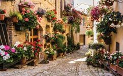 fototapet strada cu flori