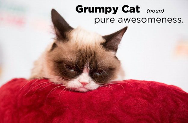 Grumpy Cat:   22 Celebrities Defined By Urban Dictionary